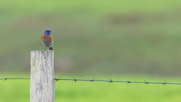 Photograph - Blues  by Kevin Dietrich