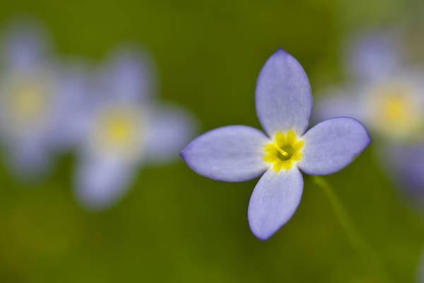 Photograph - Bluet On Green by Ken Barrett
