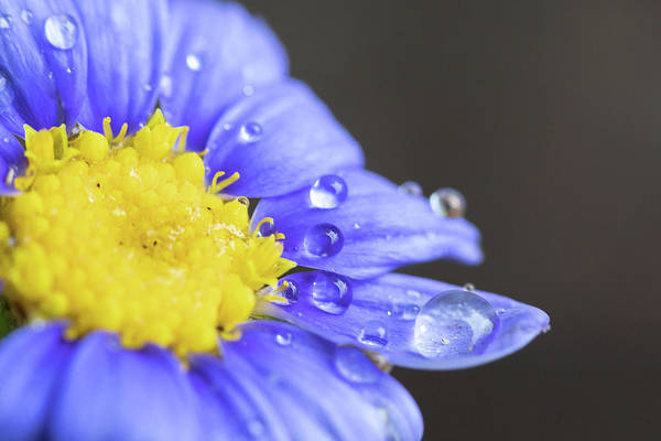Photograph - Bluey Dew by Brian Hale