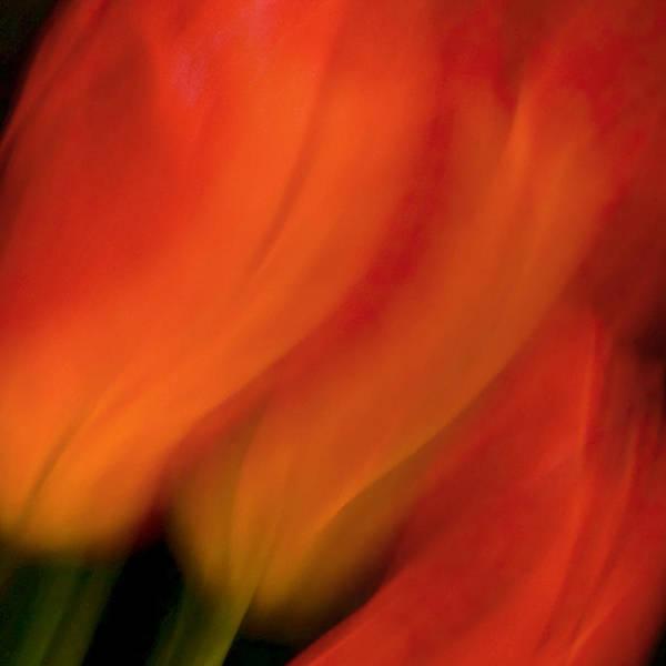 Photograph - Blur De Lis by Neil Shapiro