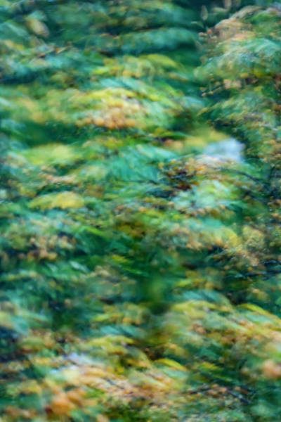 Wall Art - Photograph - Blur1 by Susan Schmidt