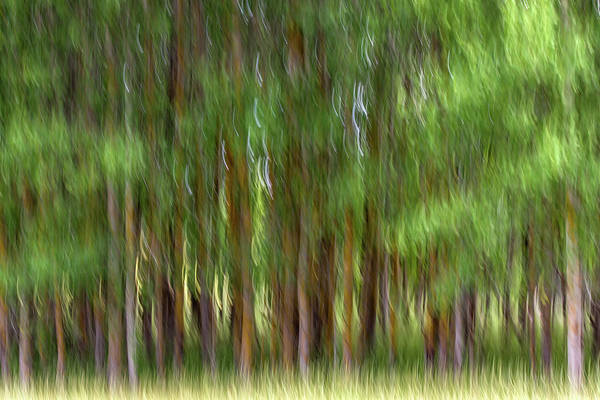 Wall Art - Photograph - Blurred Forest by Stelios Kleanthous