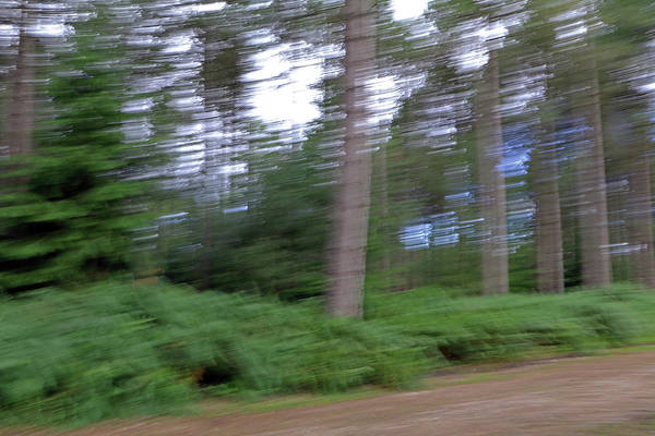 Photograph - Blurred Woods by Tony Murtagh
