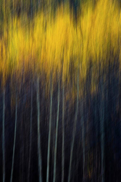 Photograph - Blurry Aspens 2 by Whit Richardson