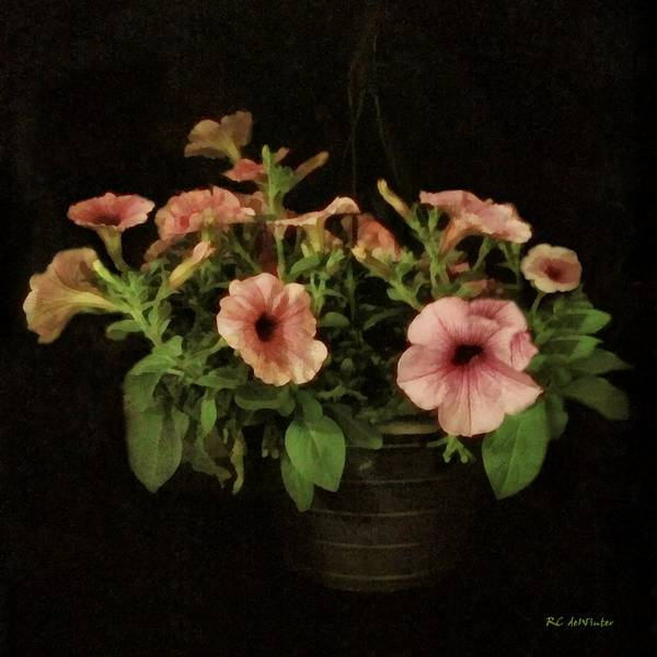 Painting - Blush In A Basket by RC DeWinter