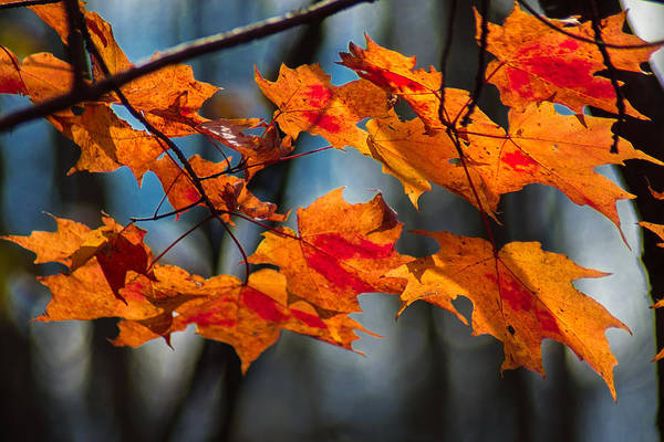 Wall Art - Photograph - Blush Of Fall by Bill Pevlor