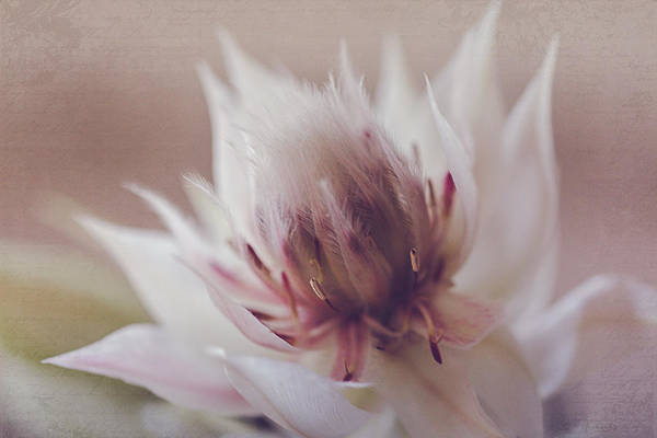 Photograph - Blushing Bride by Teresa Wilson