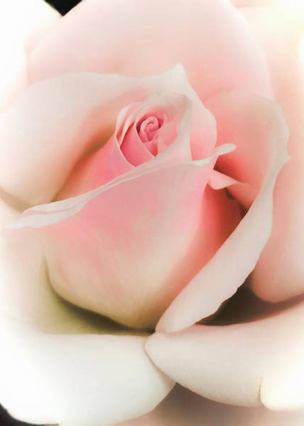 Photograph - Blushing Petals by Nathan Little