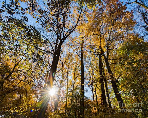 Photograph - Blydenberg Park Sunburst Through The Autumn Trees by Alissa Beth Photography