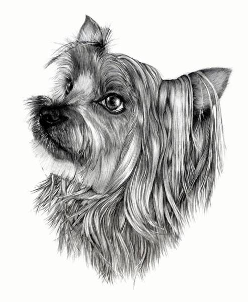 Wall Art - Drawing - BO by Lisa Bell