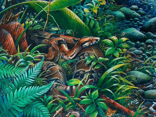 Painting - Boa In The Grass by Christopher Cox