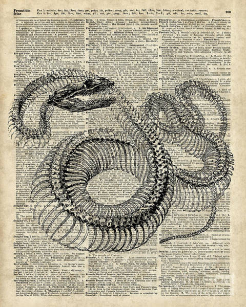 Wall Art - Digital Art - Boa Snake Skielet An Dictionary Page by Anna W