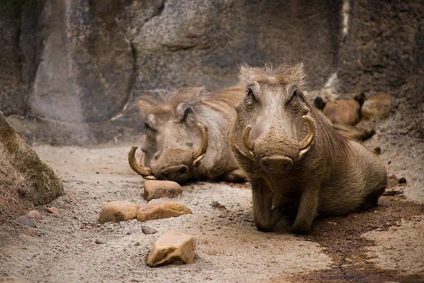 Photograph - Boar-d by Ryan Heffron