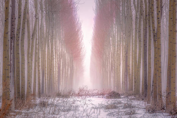Boardman Tree Farm  Art Print