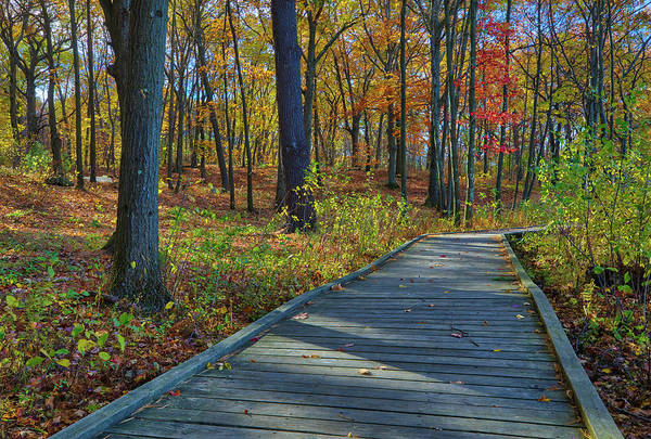 Photograph - Boardwalk At Green Hill Park by Juergen Roth
