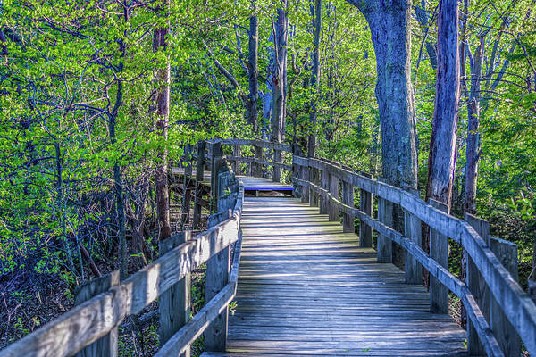 Photograph - Boardwalk Going Into The Woods by Lester Plank