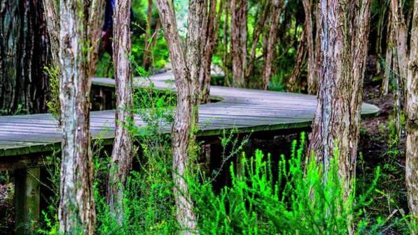 Boardwalk In The Woods Art Print