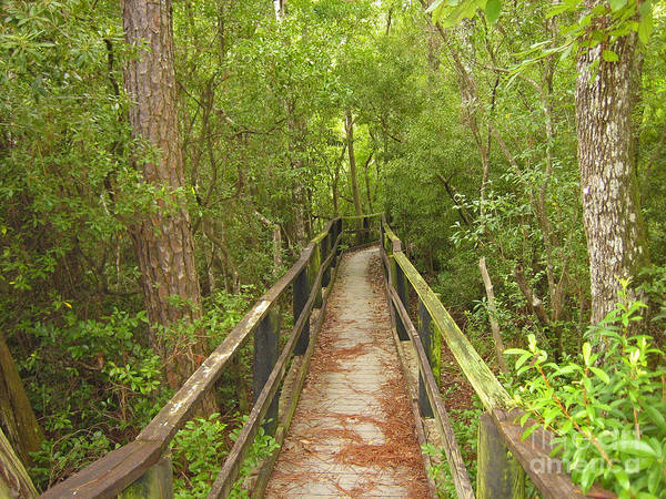 University Of West Florida Photograph - Boardwalk by Jim Sweida