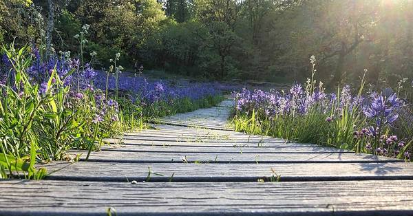 Photograph - Boardwalk Through The Flowers by Brian Eberly
