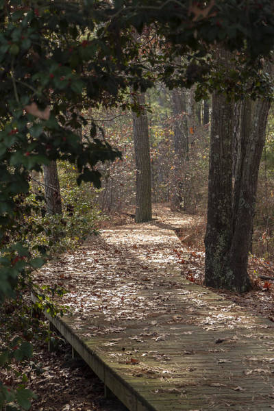 Photograph - Boardwalk Through The Woods by Liza Eckardt