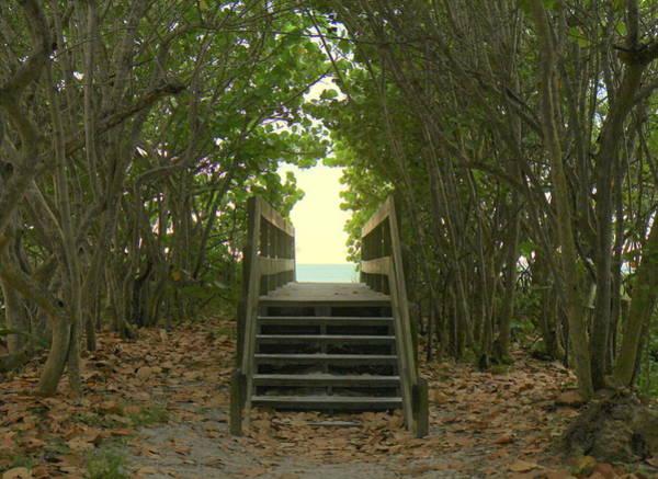 Photograph - Boardwalk To Paradise by Sean Allen