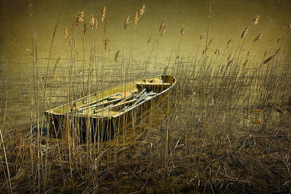 Photograph - Boat Among The Reeds by Randall Nyhof