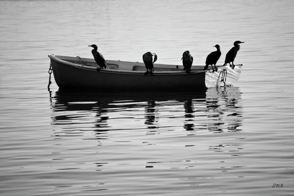 Photograph - Boats And Cormorants Plymouth Harbor Bw by David Gordon