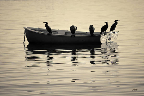 Photograph - Boats And Cormorants Plymouth Harbor Toned by David Gordon
