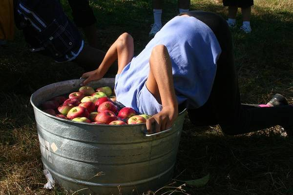 Photograph - Bobbing For Apples by Polly Castor