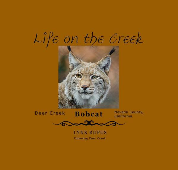 Digital Art - Bobcat - Lynx Rufus by Lisa Redfern