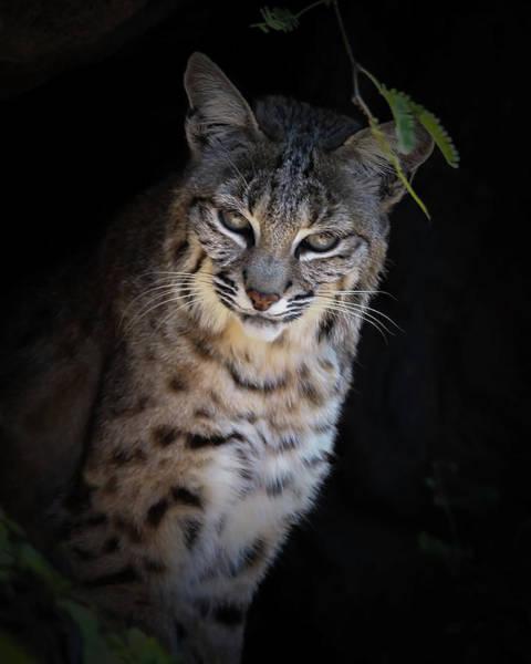 Photograph - Bobcat Overlook by Elaine Malott