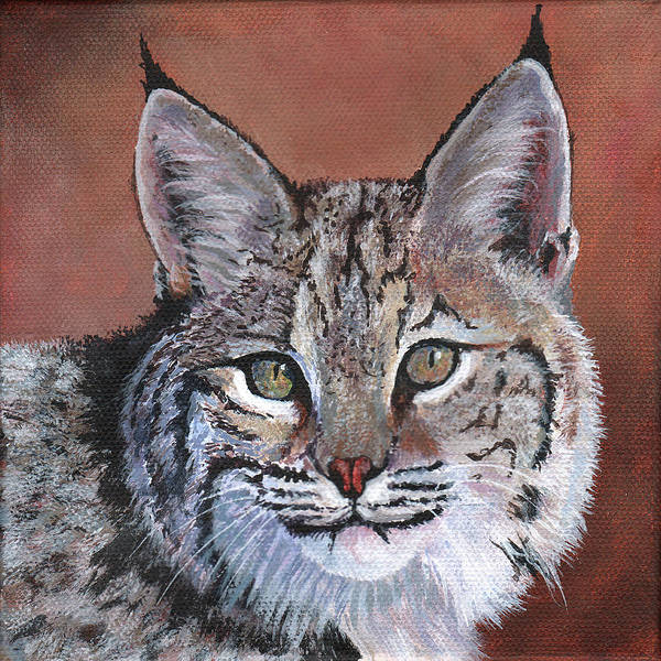 Wall Art - Painting - Bobcat by Timithy L Gordon
