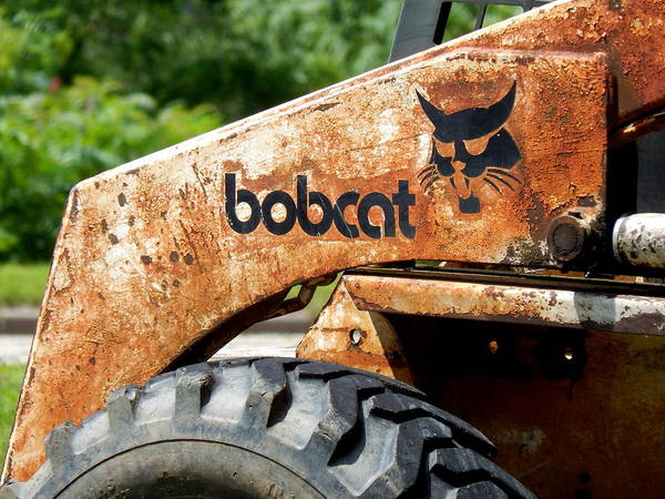 Photograph - Reduced Bobcats Strut by Wild Thing