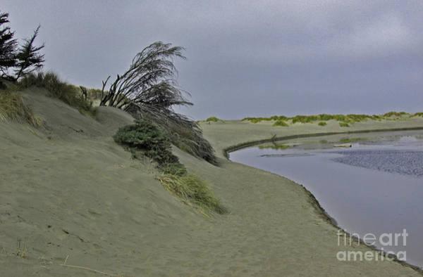 Bodega Dunes Art Print