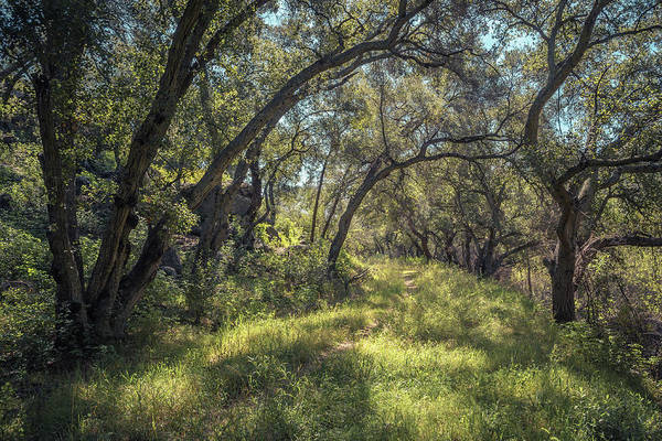 Photograph - Boden Canyon - Green Canopy by Alexander Kunz