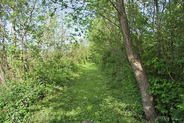 Photograph - Bog Meadow Brook Trail by Lise Winne