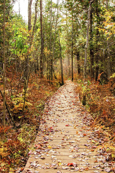 Photograph - Bog Trail by Rod Best