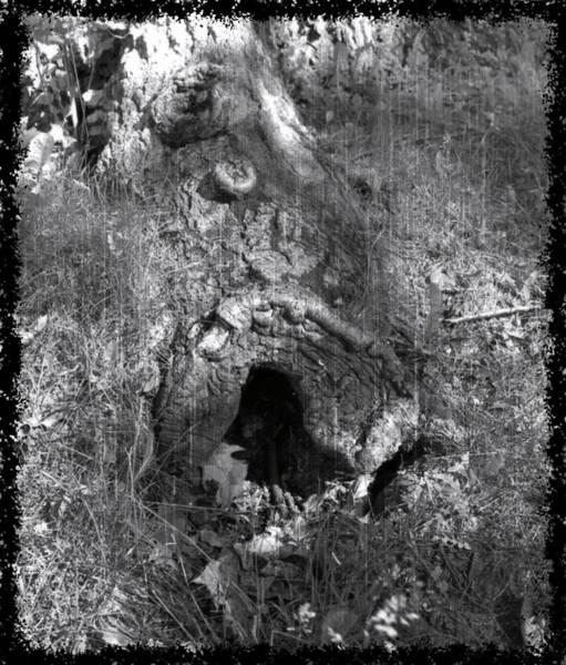 Photograph - Bogaert's Den by Mario MJ Perron