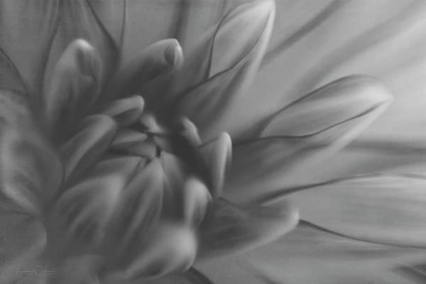 Photograph - Bohemain Rhapsody Monochrome by Teresa Wilson