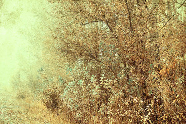 Rights-managed Wall Art - Photograph - Bohemian Autumn by Jenny Rainbow