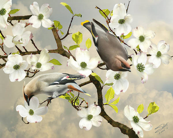 Birder Painting - Bohemian Waxwings In Dogwood Tree by M Spadecaller