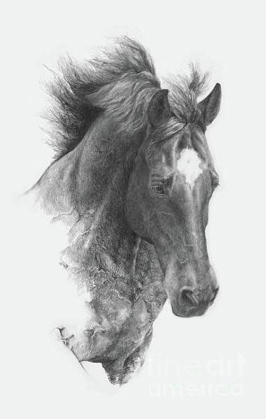 Warmbloods Drawing - Boindlrss Joy by Susan Mccarty