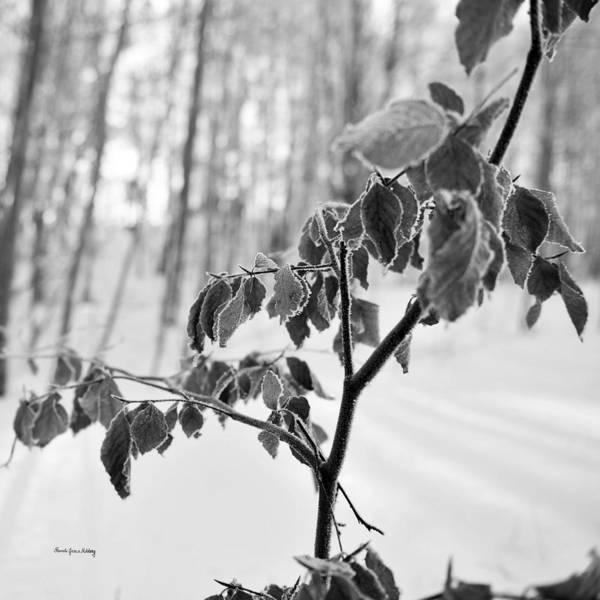 Photograph - Boisterousness by Randi Grace Nilsberg