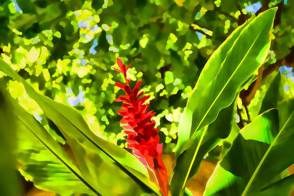 Digital Art - Tropical Impressions - Bold Red Ginger Flower by Georgia Mizuleva