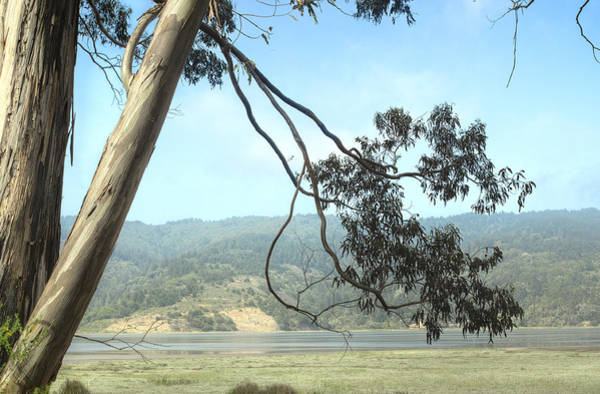 Photograph - Bolinas Bay Mist 3 by Peter Dyke