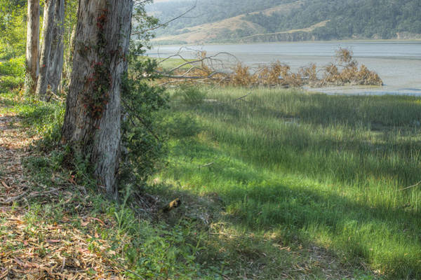Photograph - Bolinas Bay Mist 4 by Peter Dyke