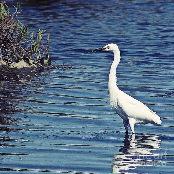 Photograph - Bolsa Chica Wetlands - Huntington Beach by Jenny Revitz Soper