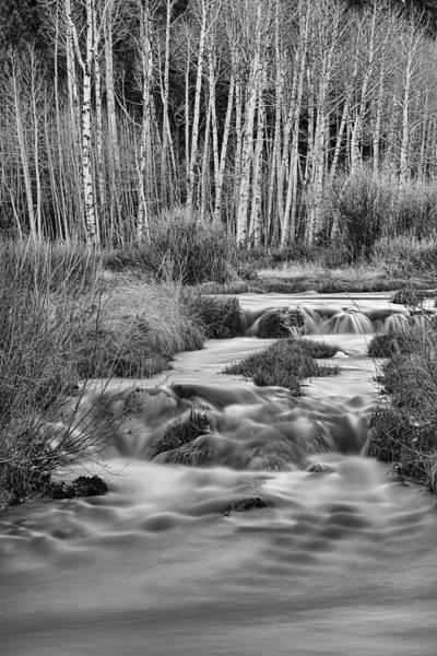 Photograph - Bonanza Streaming by James BO Insogna