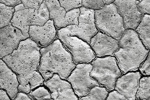 Photograph - Bone Dry  by Olivier Le Queinec