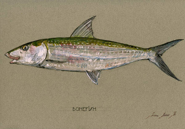Fly Fishing Painting - Bonefish by Juan  Bosco